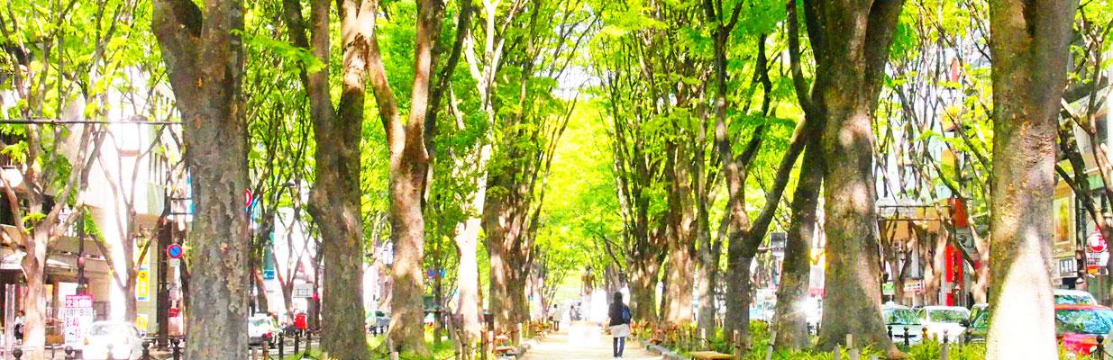 定禅寺通りー春&夏
